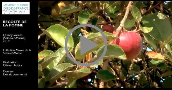 Quincy-voisins (Seine-et-Marne), 2019, Récolte de la pomme
